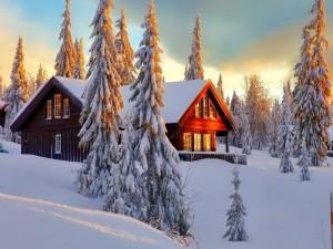 Postal: Hermosa cabaña entre pinos cubiertos de nieve
