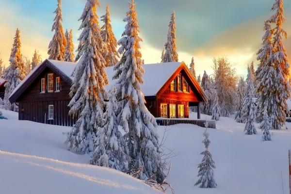 Hermosa cabaña entre pinos cubiertos de nieve