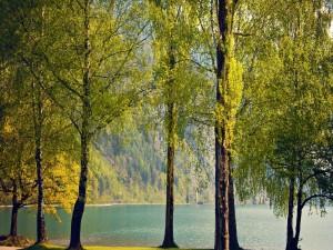 Hermosos árboles próximos al lago