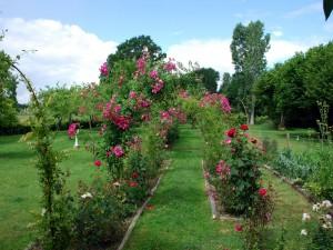 La rosaleda en el castillo de la Montchevalleraie
