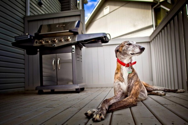 Perro guardián de la casa