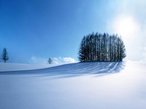 Conjunto de árboles sobre la blanca nieve