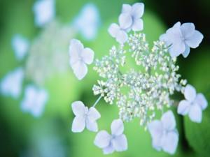 Unas bonitas flores blancas