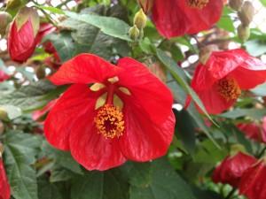 Postal: Bellas flores rojas