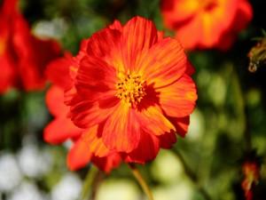 Postal: Bonita flor jaspeada