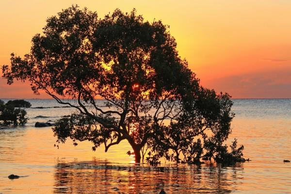 Puesta de sol trás un árbol sumergido en el mar