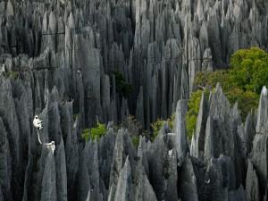 Postal: Lémures en unas rocas, Madagascar