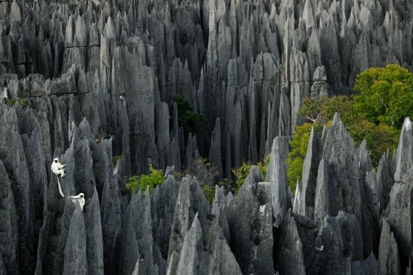 Lémures en unas rocas, Madagascar