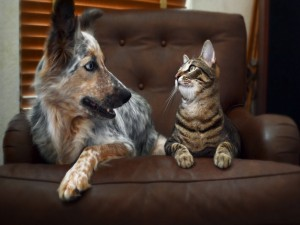 Postal: Dos amigos sentados en el sofá