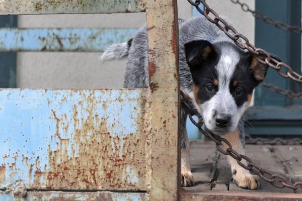 Un tierno perrito detrás de una valla