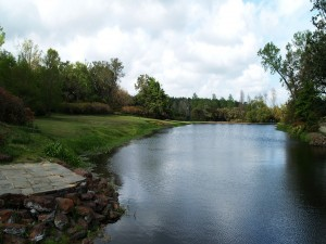 Postal: Río en una zona verde