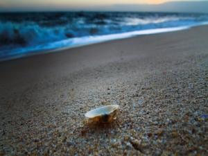 Postal: Concha sobre la arena de una playa