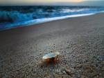 Concha sobre la arena de una playa