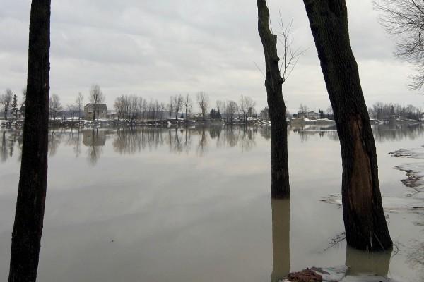 Árboles en las frías aguas del río
