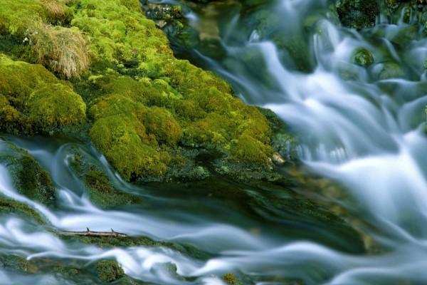 Corriente de agua entre el musgo