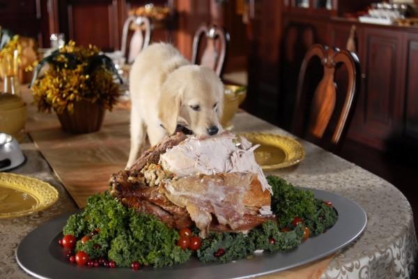 Perro sobre una mesa mordiendo el asado