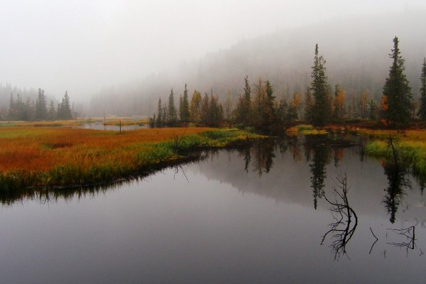 Niebla en otoño