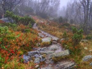 Niebla en un bosque