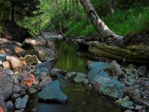 Riachuelo en el interior de un bosque