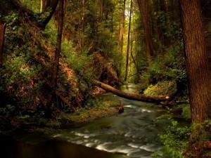 Postal: Río en el interior de un bosque