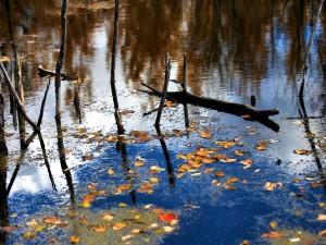Postal: Hojas y palos en la superficie del agua