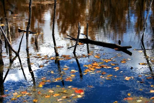 Hojas y palos en la superficie del agua