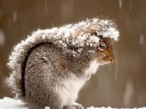 Una ardilla bajo la nieve