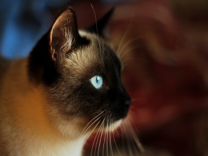 Postal: Perfil de un bonito gato
