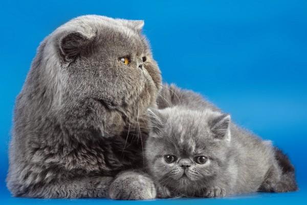 Gatito junto a su madre
