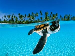 Postal: Tortuga marina en la superficie del mar