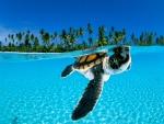 Tortuga marina en la superficie del mar