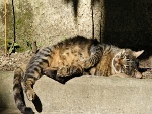Gato dormido recibiendo el calor del sol