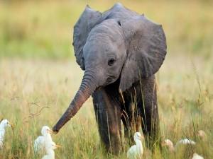 Postal: Elefantito haciendo amistades