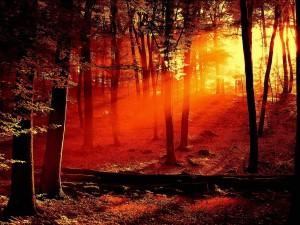 Postal: Luz del atardecer en el interior de un bosque