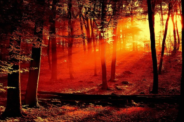 Luz del atardecer en el interior de un bosque