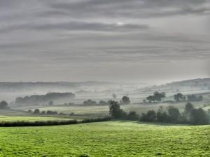 Niebla en un paisaje campestre