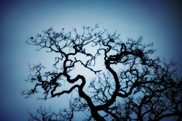 Las ramas torcidas de un árbol