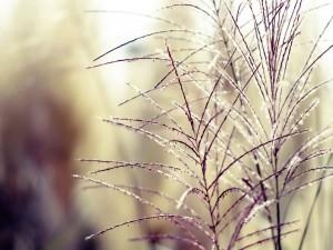 Ramas de una planta