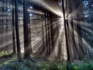 Postal: Los rayos del sol penetrando en el interior del bosque