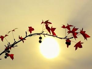 Postal: Hojas otoñales y el sol