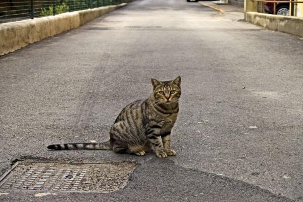 Gato callejero junto a una alcantarilla