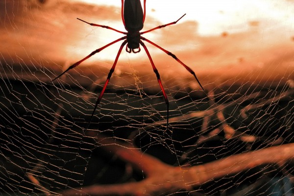 Una gran araña en su tela