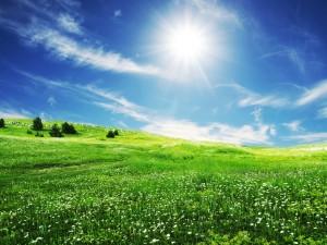 El brillante sol iluminando una pradera verde