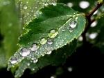 Hoja repleta de gotas de agua
