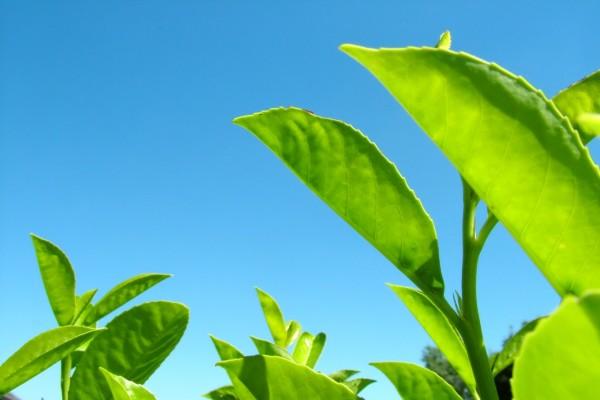 Hojas verdes bajo un cielo azul