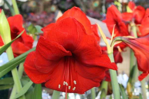 Hermosas flores rojas creciendo en un jardín