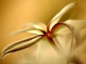 Postal: Una delicada flor blanca