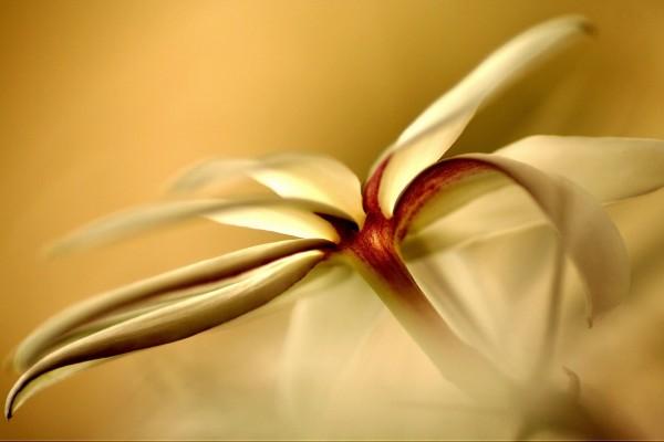 Una delicada flor blanca