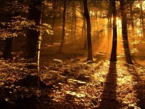 Postal: La luz del sol en el interior de un bosque