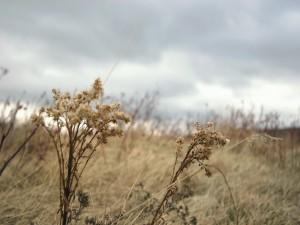 Plantas secas en el campo